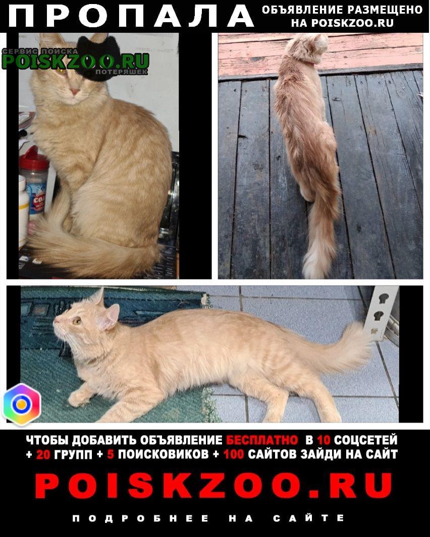 Пропала кошка муся еще не нашлась Яхрома