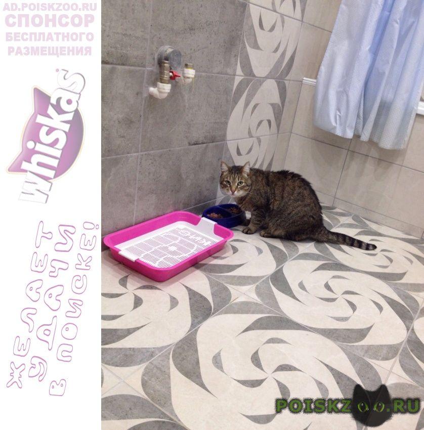 Пропал кот г.Михайловск Ставропольский край