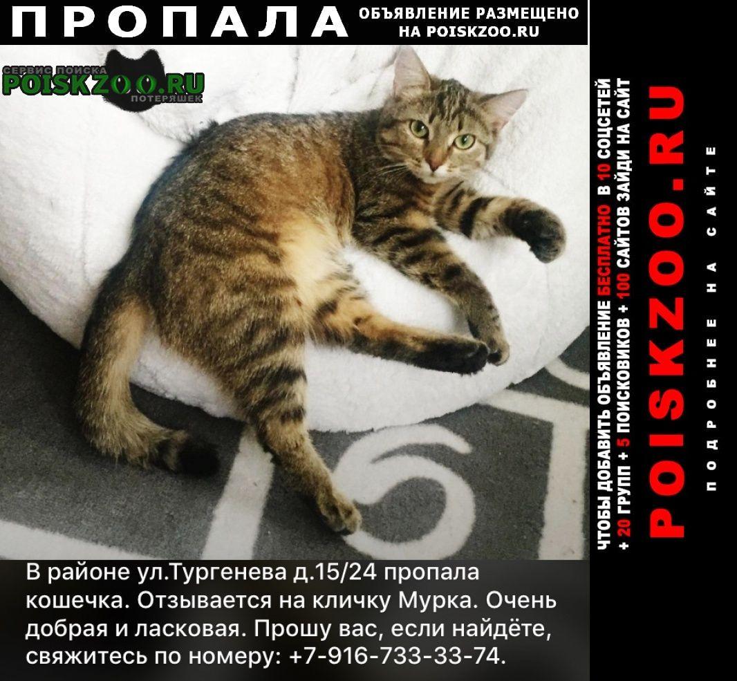 Пропала кошка Ступино