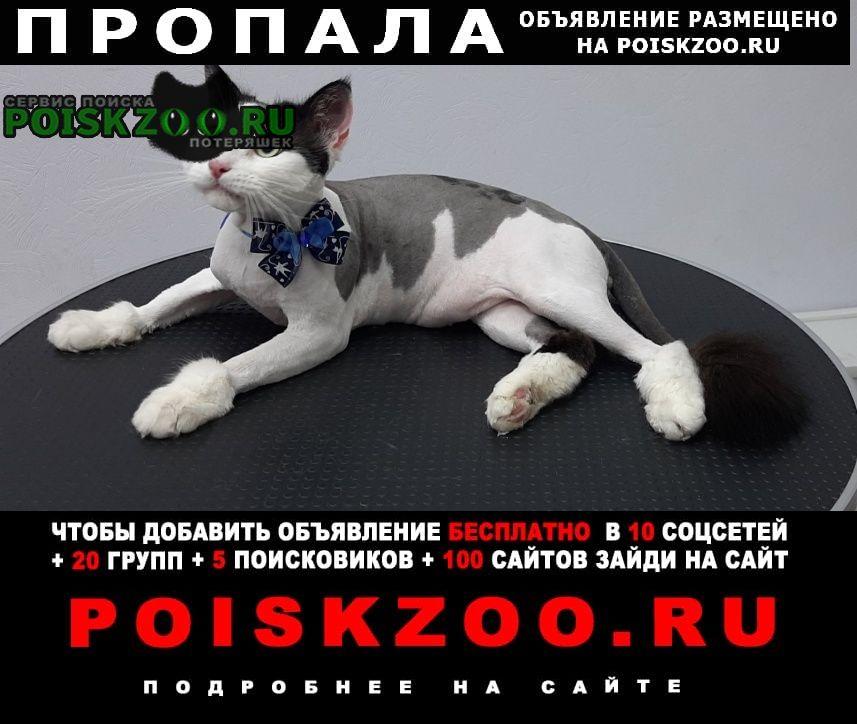 Пропал кот в соломбале Архангельск