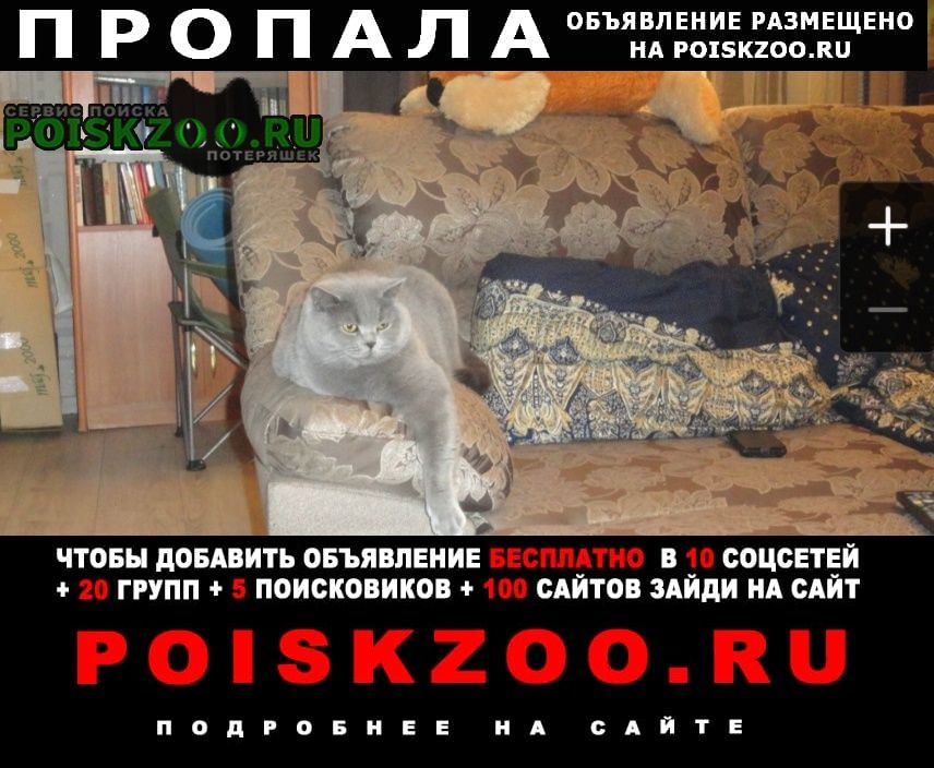 Пропала кошка серая -британка в лопухинке Ломоносов
