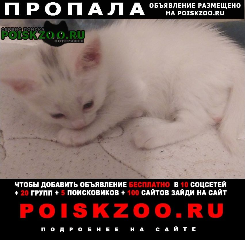 Пропала кошка по кличке сода, белая Ногинск