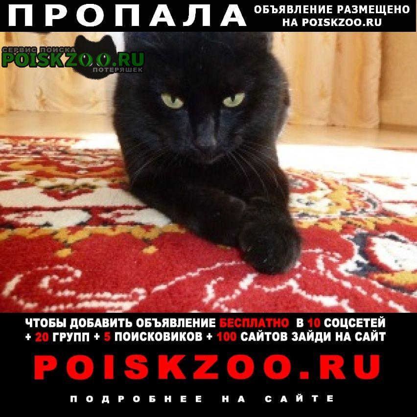 Пропала кошка Зеленодольск