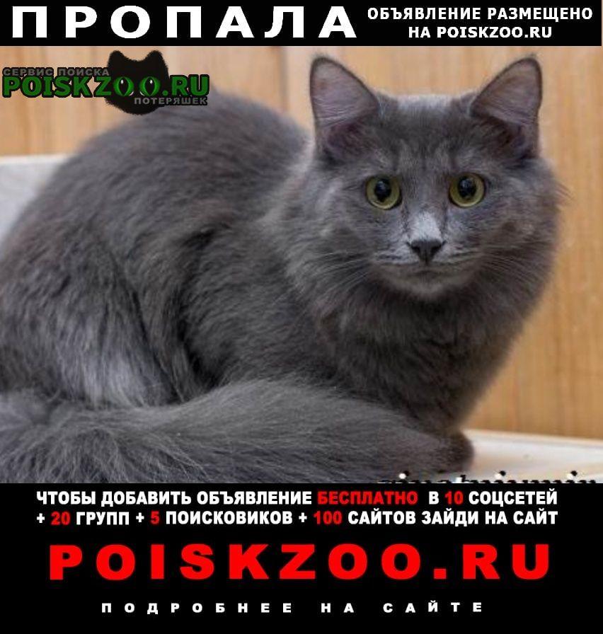Пропал кот вознаграждение Калуга
