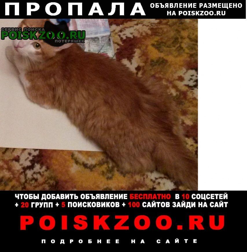 Пропал кот Калуга