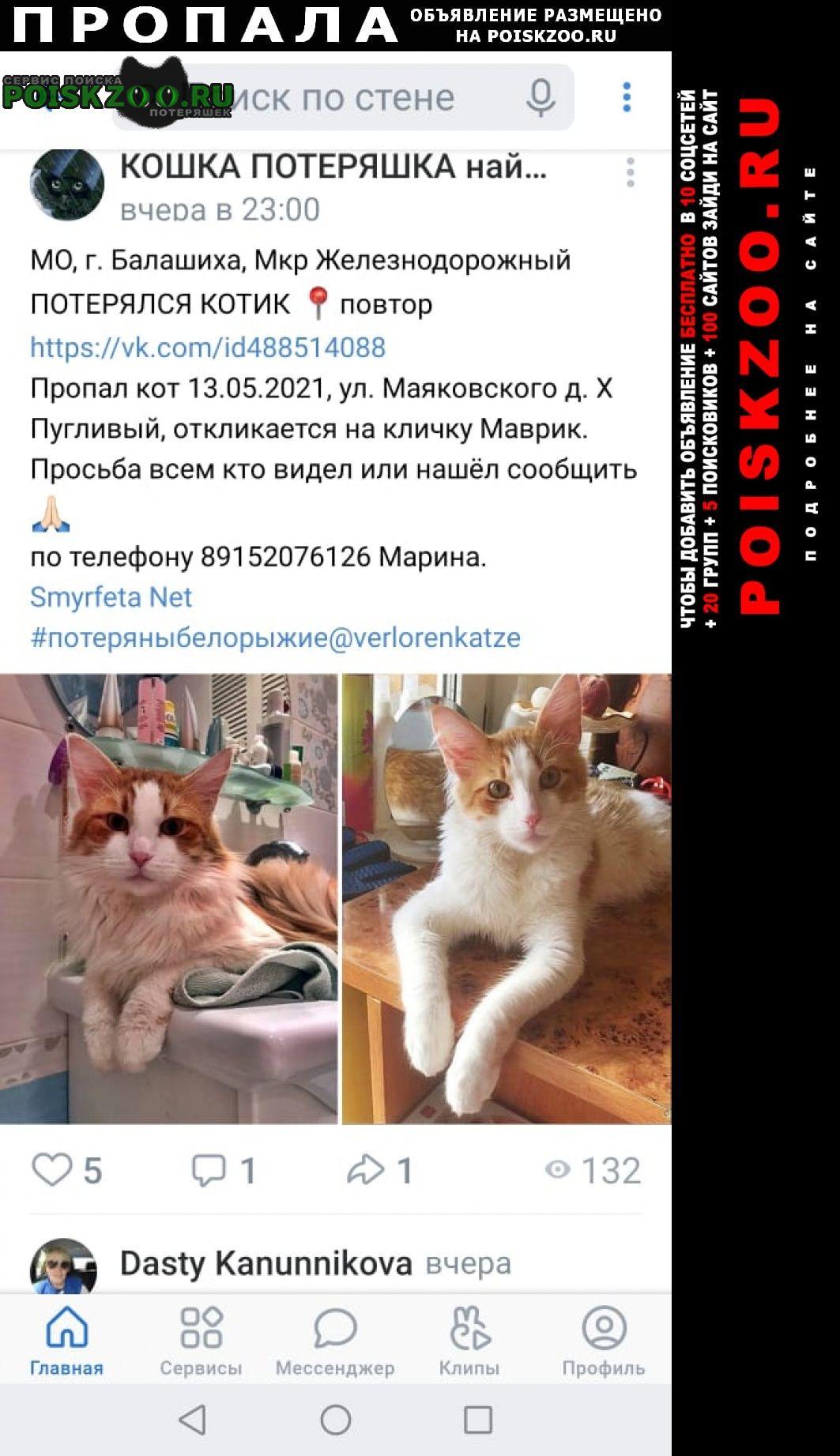 Пропал кот за вознаграждение Железнодорожный (Московск.)