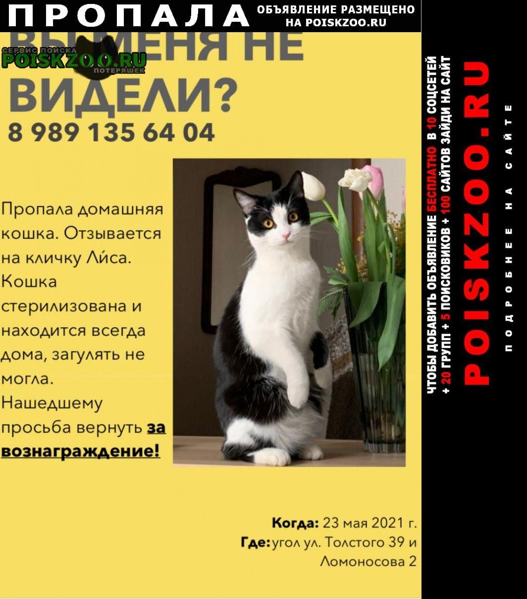 Пропала кошка Владикавказ