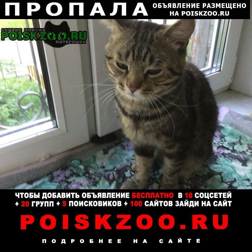 Пропал кот 23 мая в люблино Москва