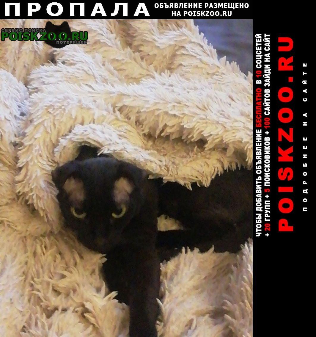 Пропал кот метис корниш рекса и сфинкса Москва