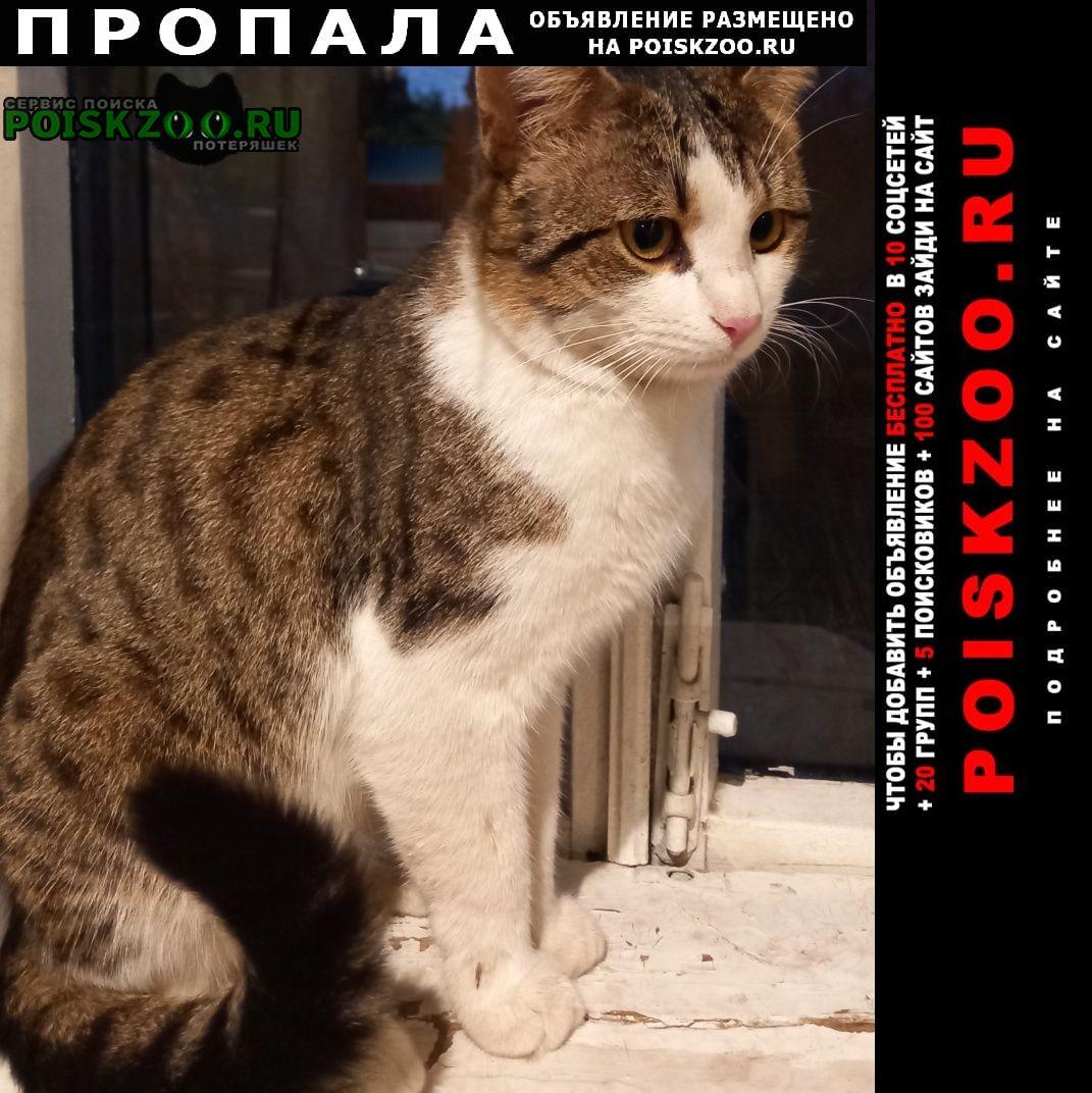 Пропал кот деревня мотяково. Люберцы