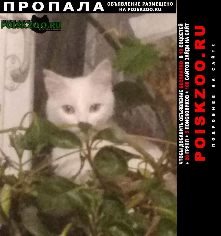 Пропала кошка белая со шрамом на шее Казань
