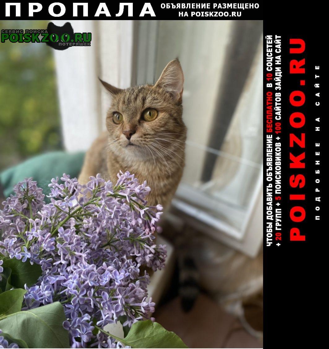 Пропала кошка, на нассу родимая пятно Москва