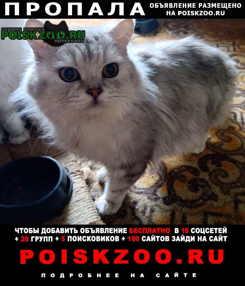 Пропал кот песцового окраса, белый с серым Москва