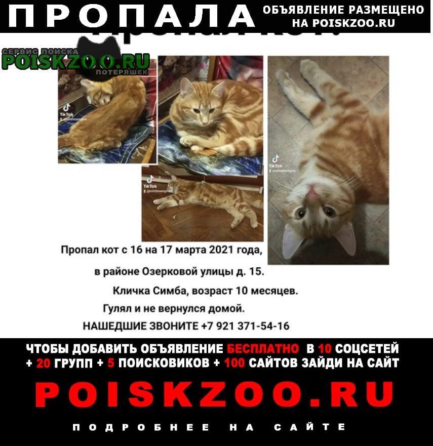 Пропал кот Петродворец