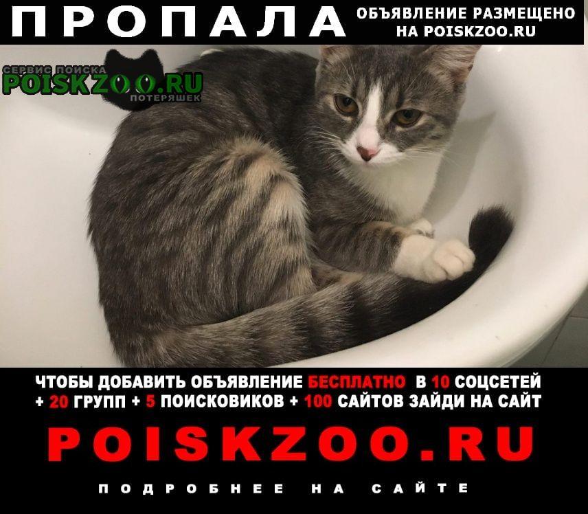 Пропала кошка помогите найти любимую кошку Ростов-на-Дону