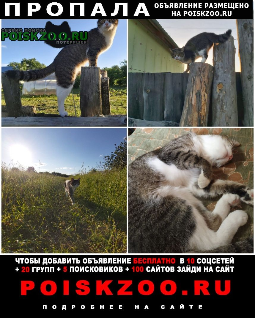 Пропала кошка Сухой Лог