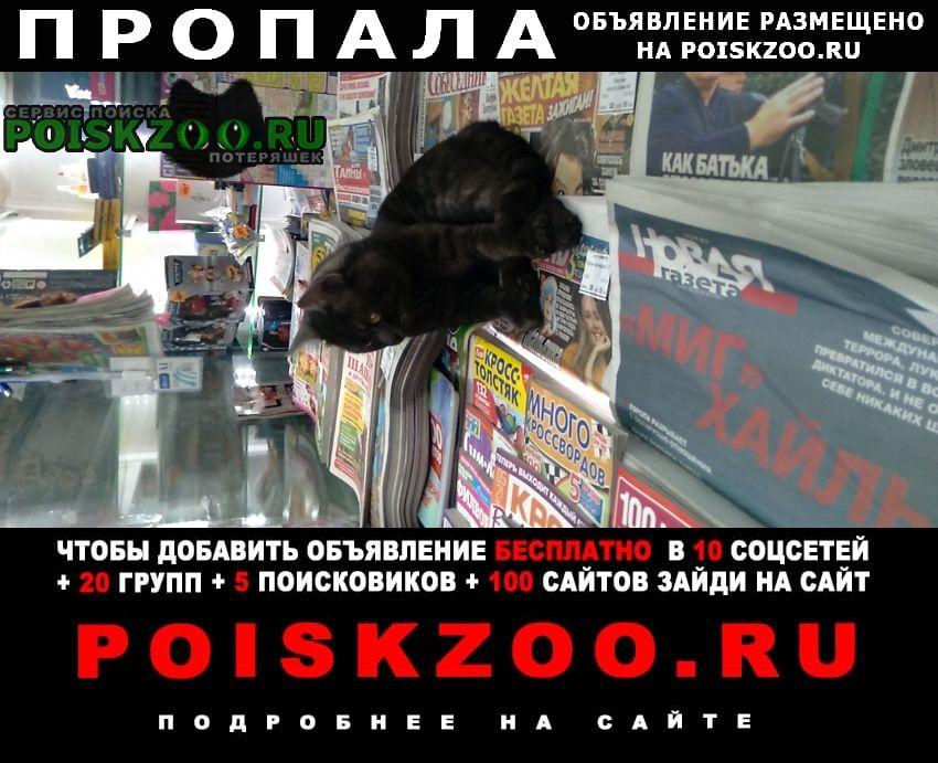 Пропала кошка кот у метро чертановская Москва
