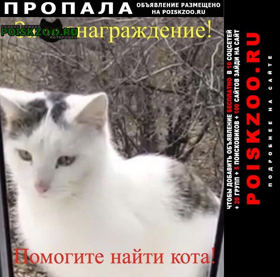Пропал кот Каменск-Шахтинский