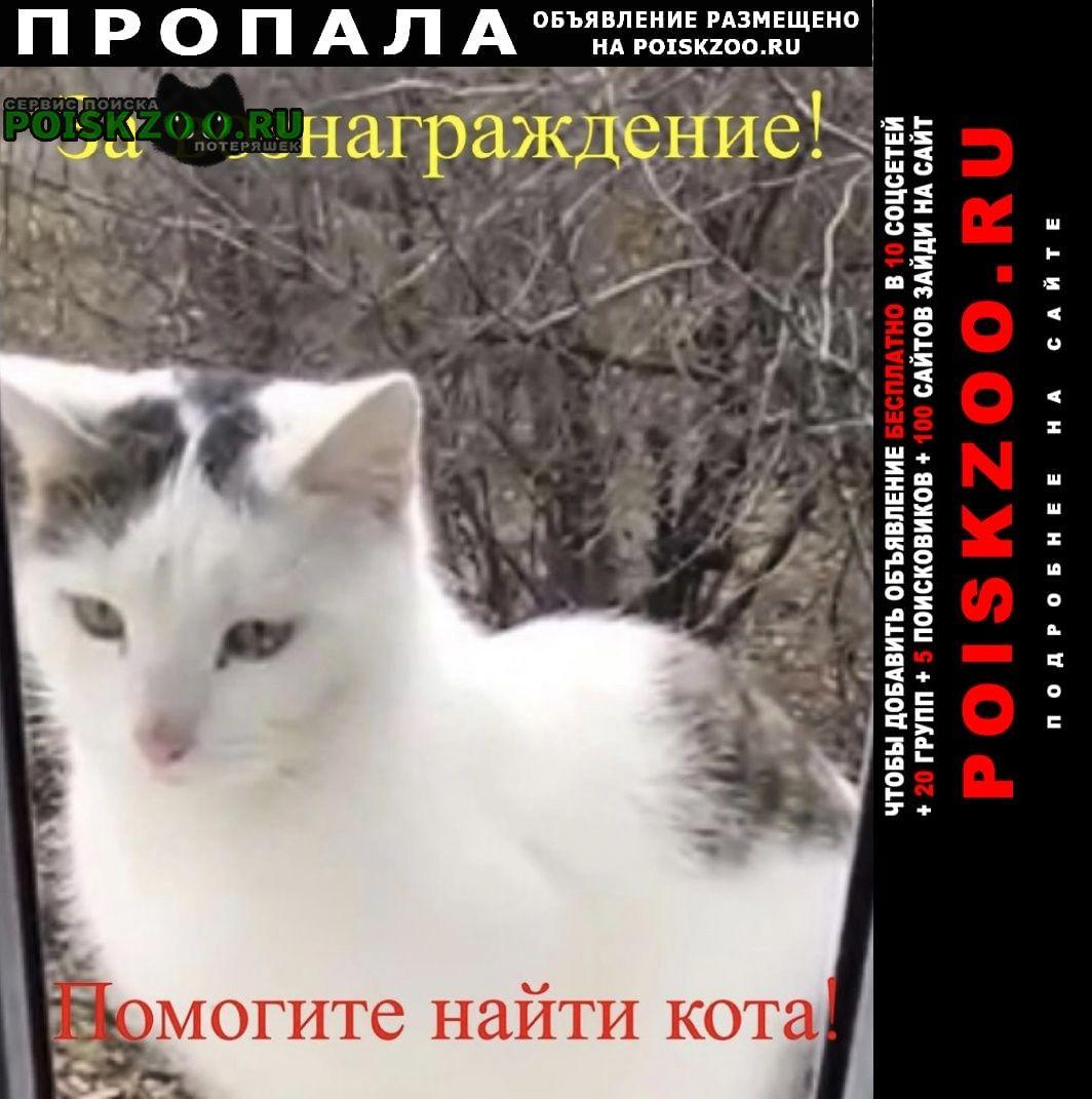 Пропал кот Ремонтное