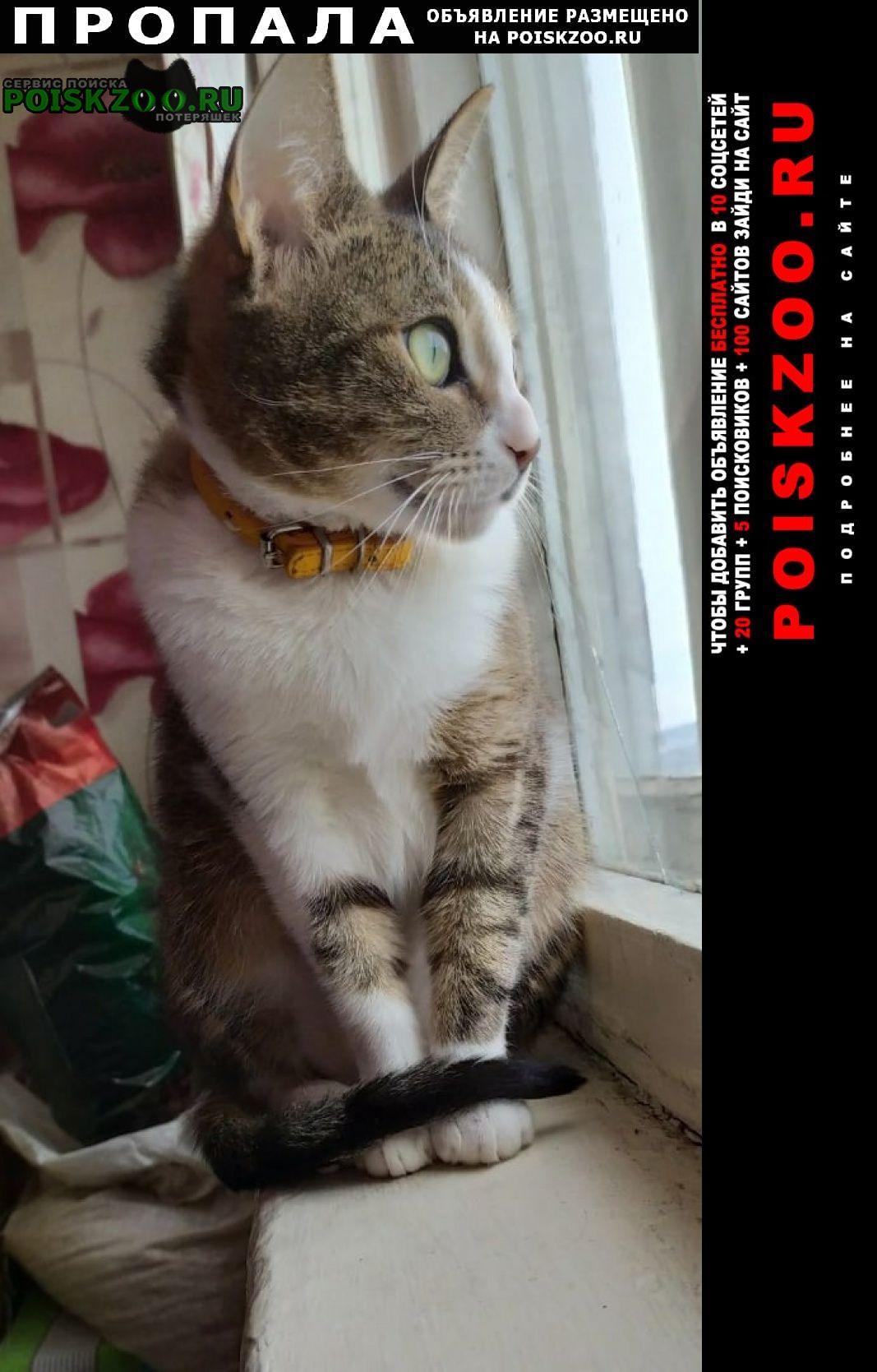 Пропала кошка потерялась, в районе дома 137 по к Мурманск