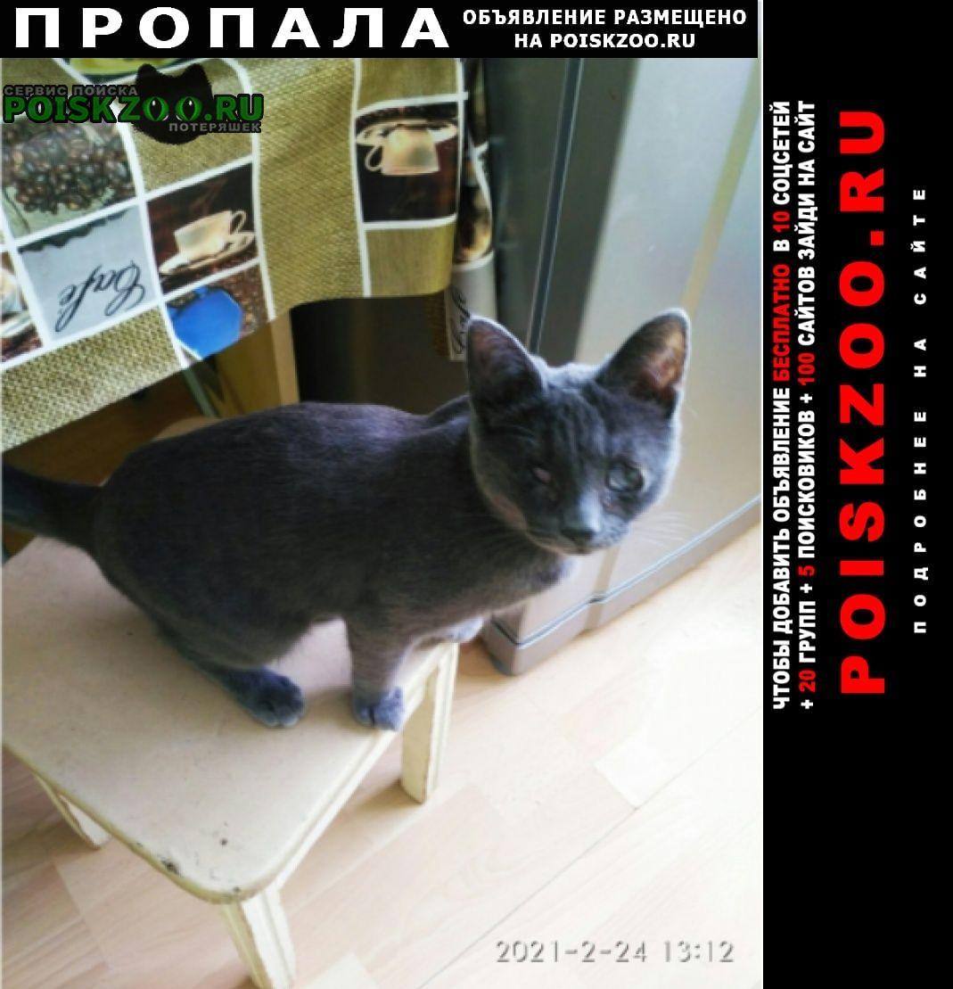 Пропала кошка Тутаев