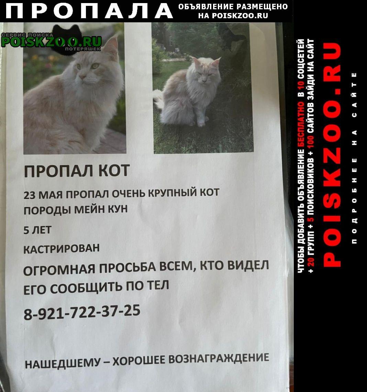 Пропал кот Вологда