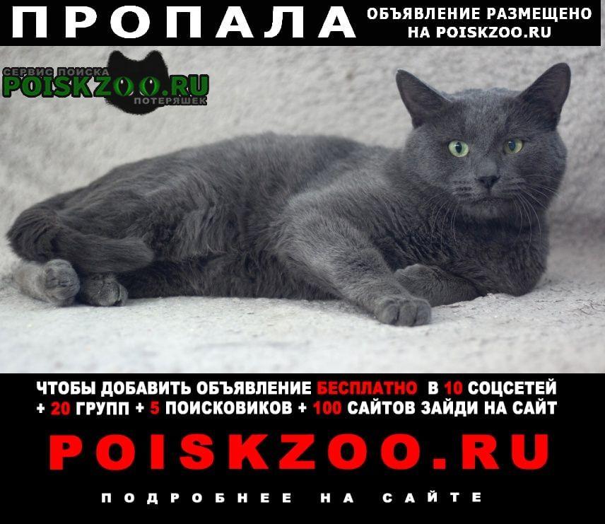 Пропал кот серый, метис британца Егорьевск