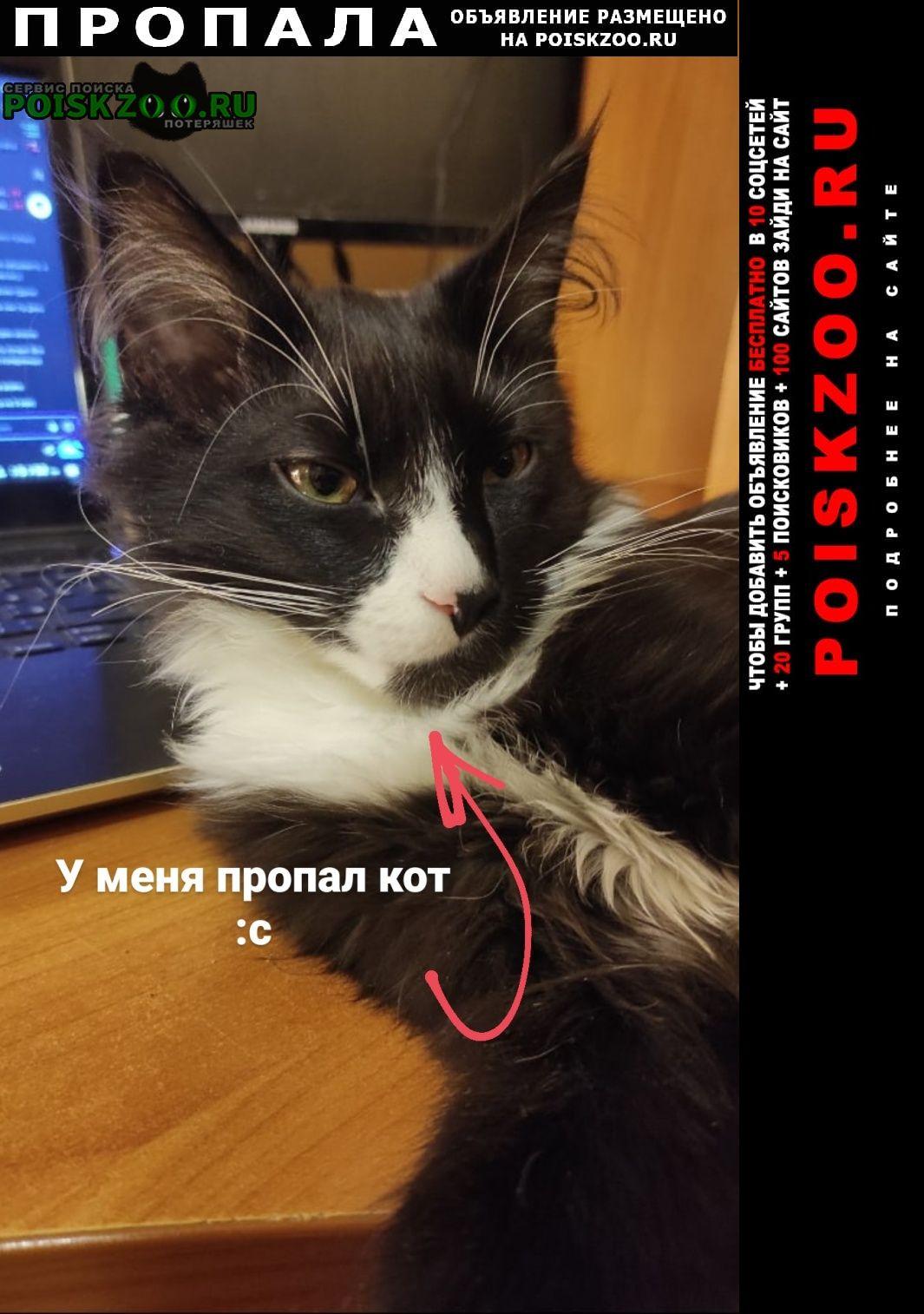 Пропала кошка котик Переславль-Залесский