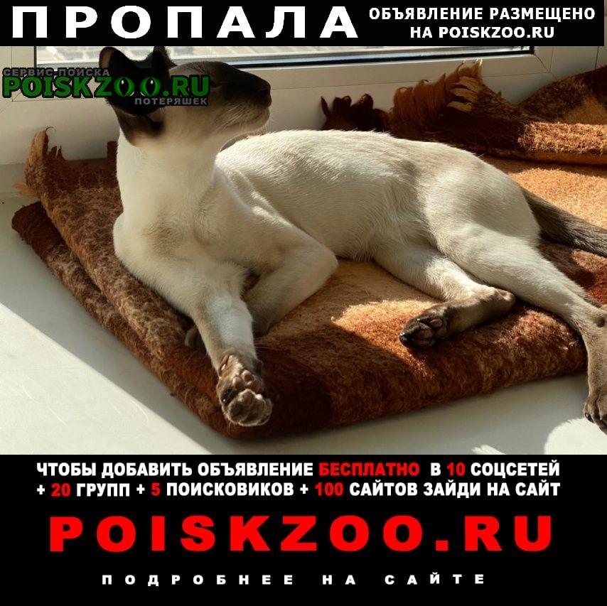 Пропала кошка. Красноярск