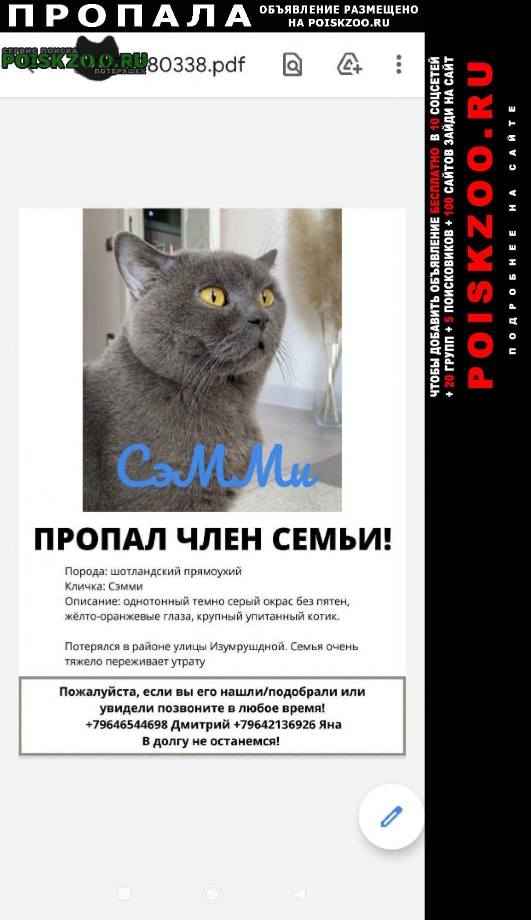 Пропал кот сэмми потерял. дом его ищут хозяева. Адлер