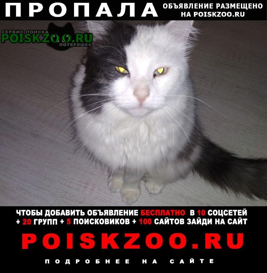 Пропал кот Москва