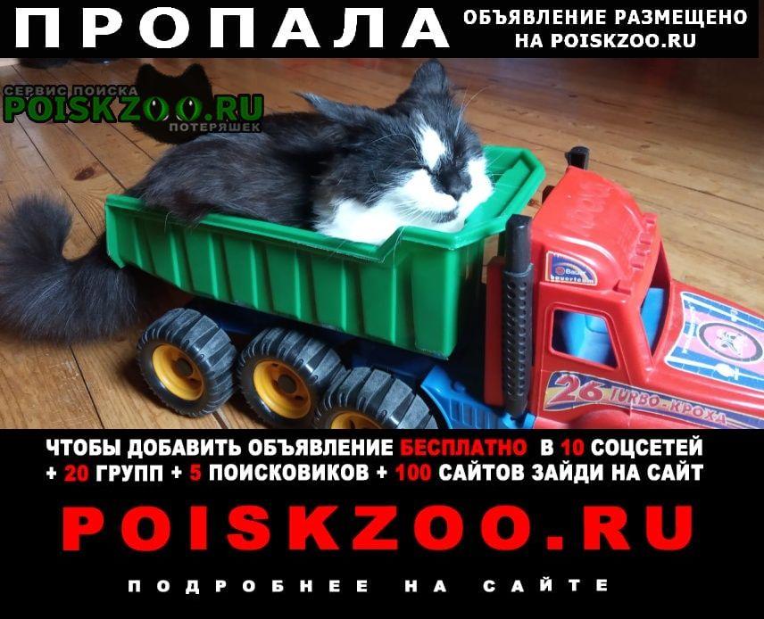Пропала кошка пуша 1, 5 года кп дубки темьянь Заокский