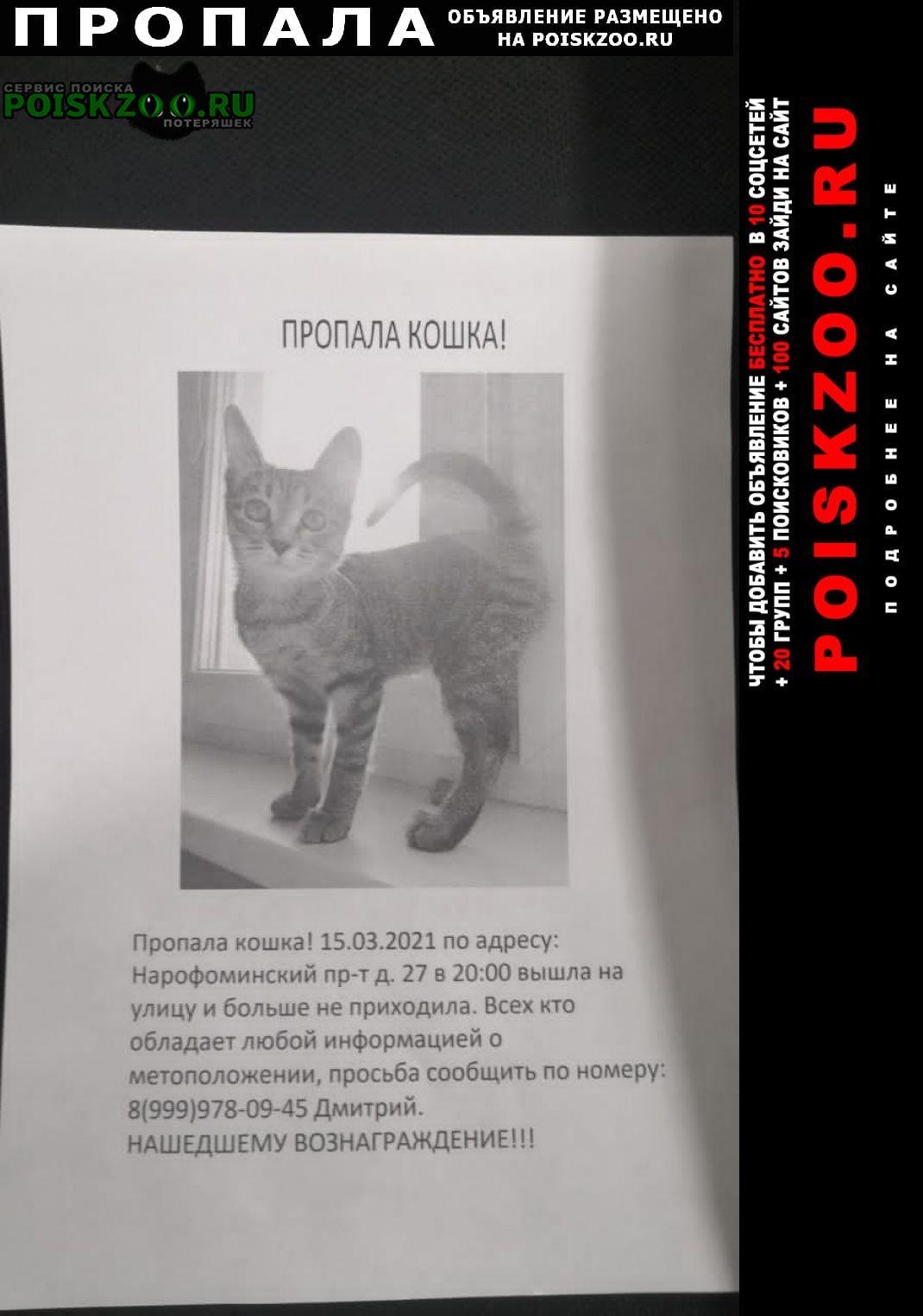 Пропала кошка Голицыно (Московская обл.)