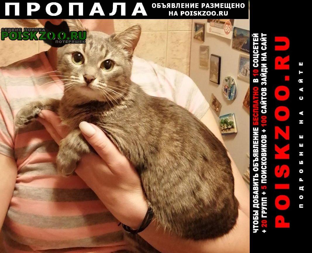 Пропала кошка мася Москва