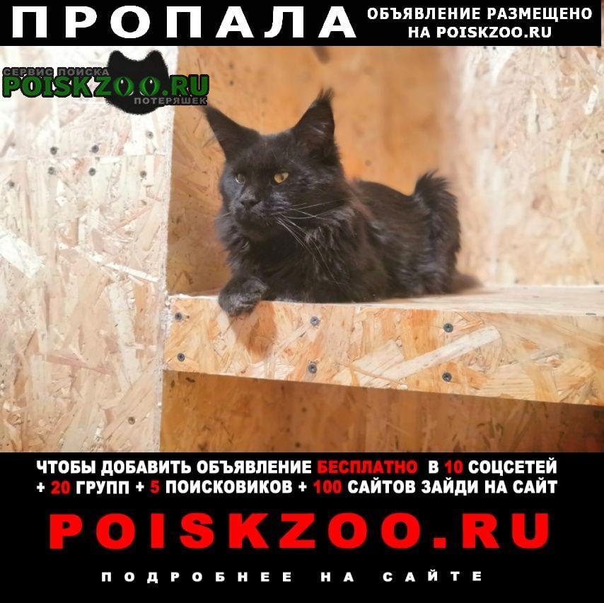 Пропал кот мейн-кун, барсик Кохма