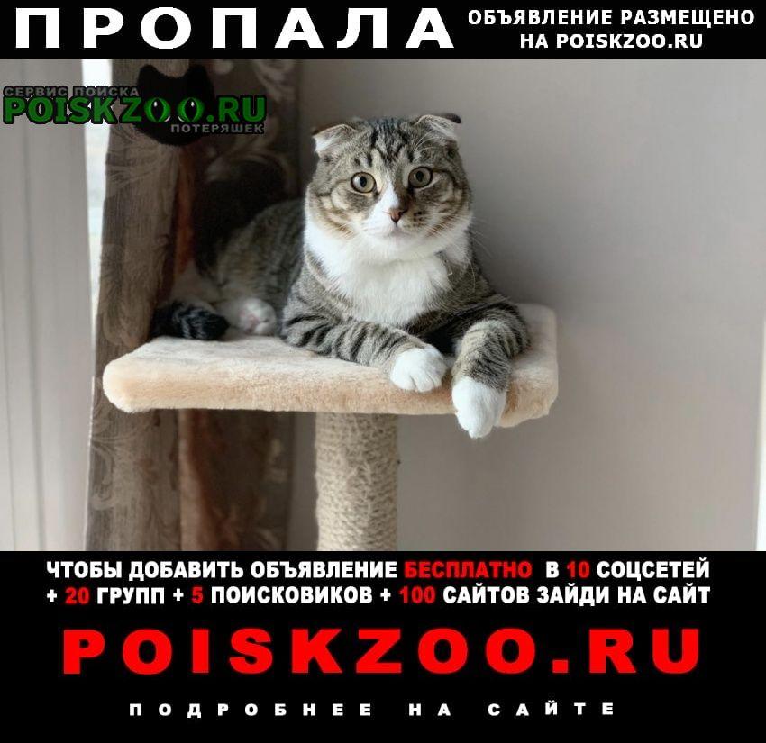 Пропал кот. и мо Москва