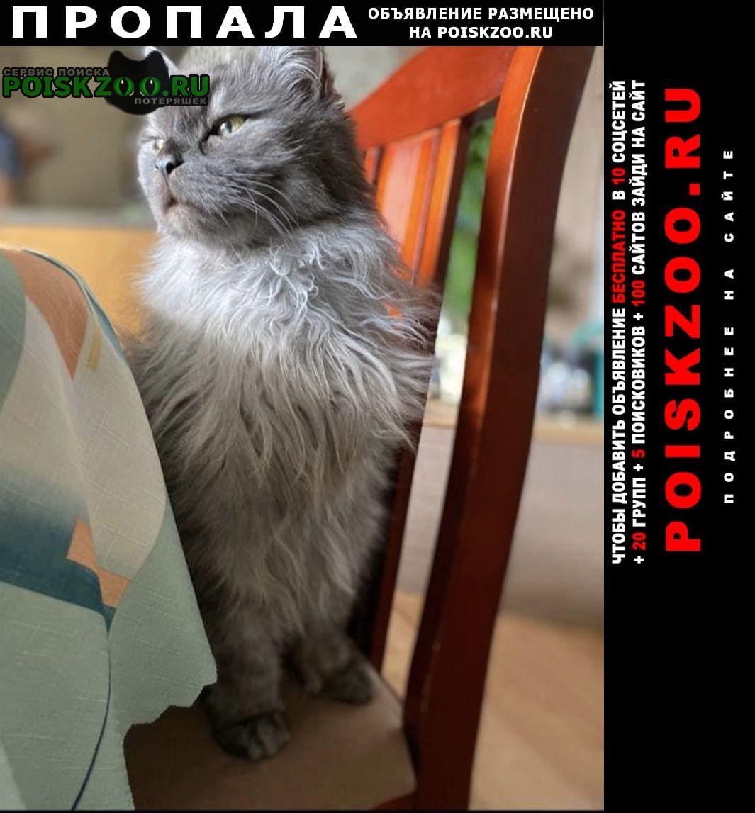 Пропал кот серый -британец Санкт-Петербург