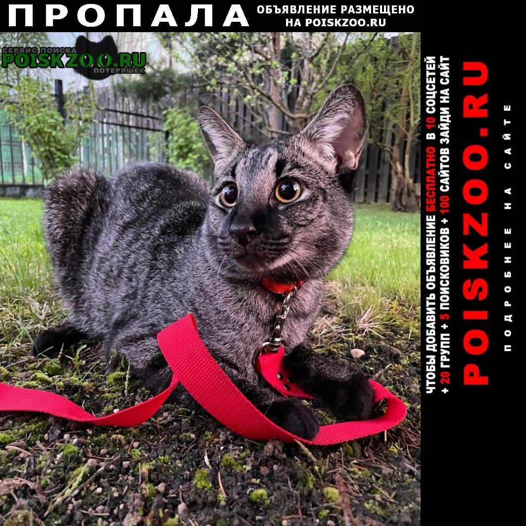 Пропал кот чаузи Москва