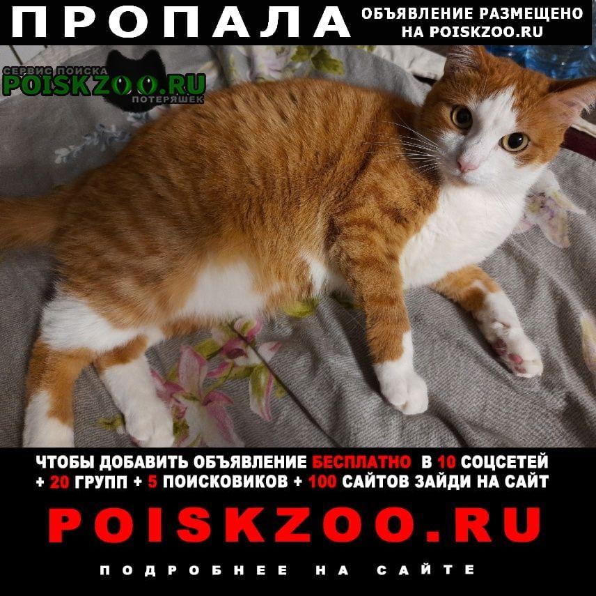 Пропал кот Губкин