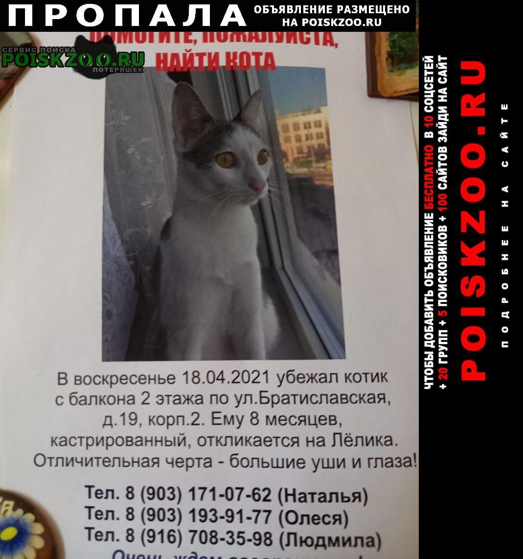 Пропал кот молодой ик. Москва