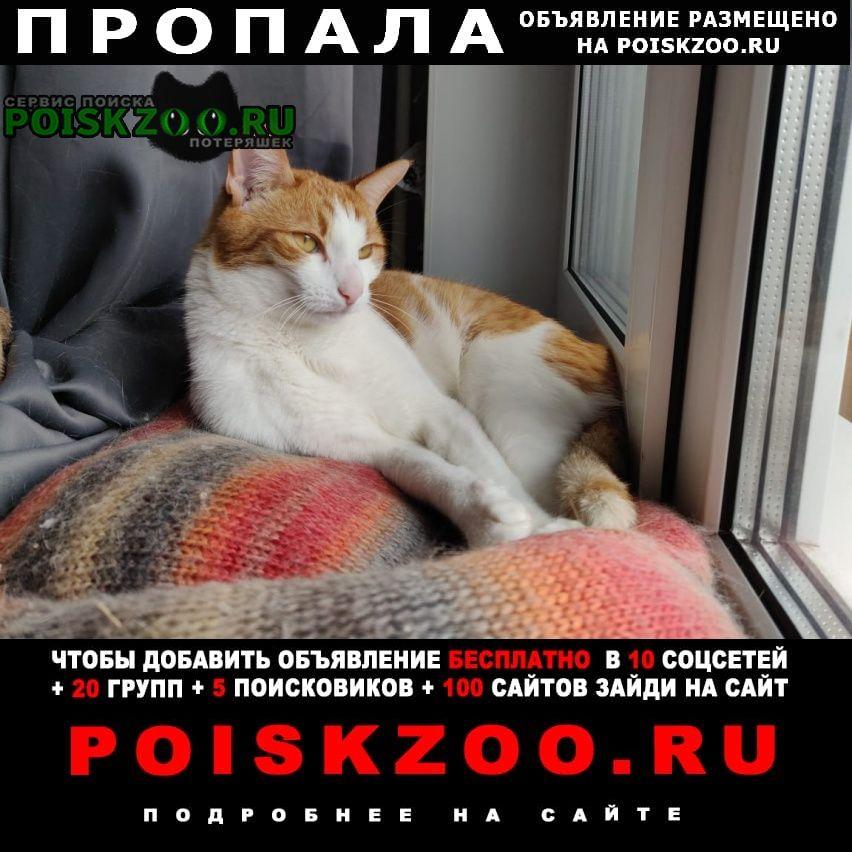 Пропала кошка награда 10 000р. Москва