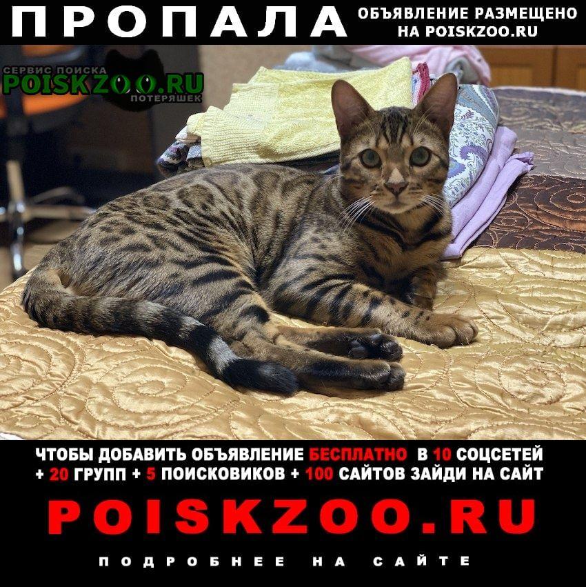 Пропал кот бенгал калужская-беляево Москва