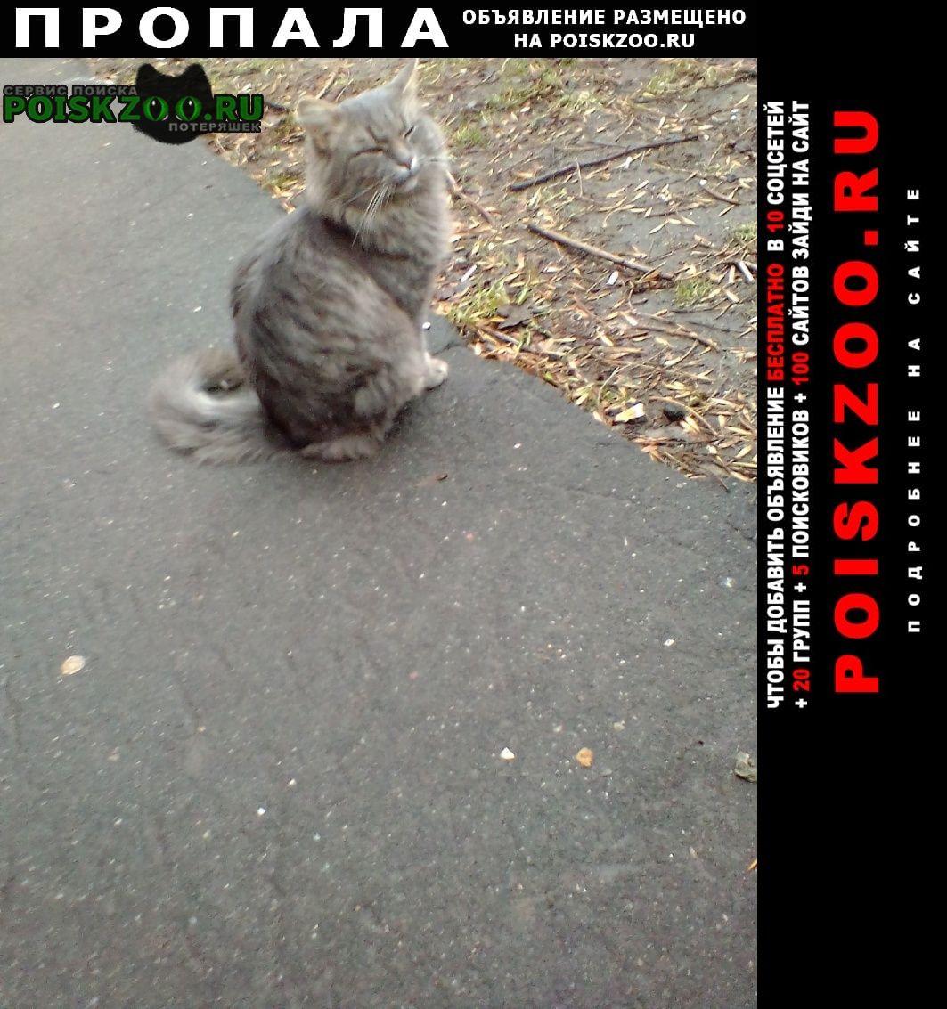 Пропала кошка ищем котика возраст 4 года Ярославль