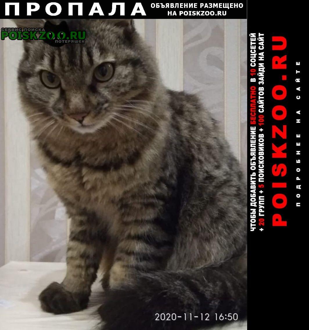 Пропал кот 22.04 -. Хабаровск