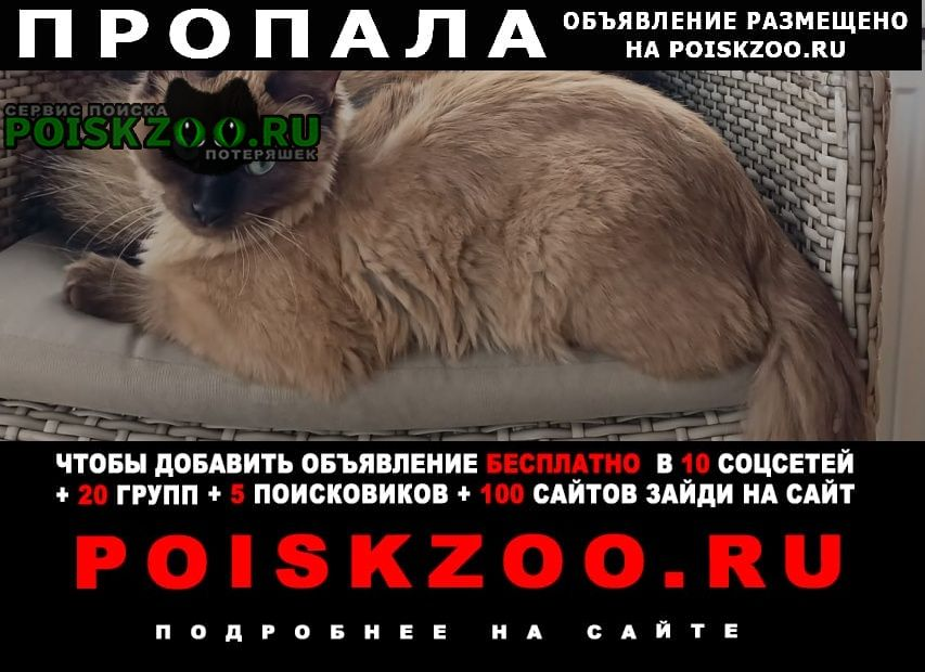 Пропал кот - сиамец в д. новосельцево Мытищи