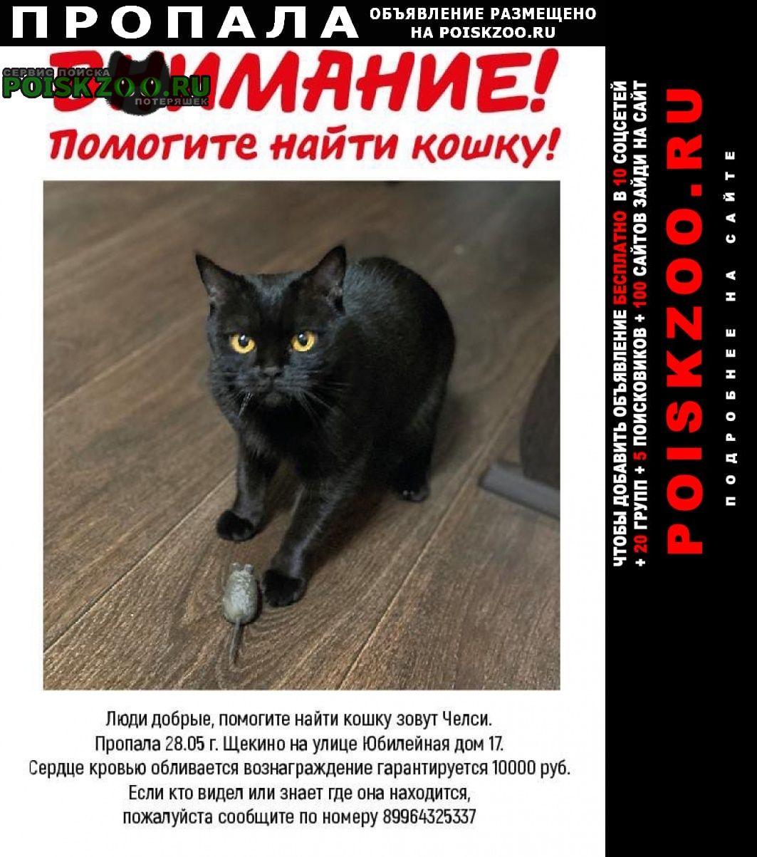 Пропала кошка вознаграждение гарантируется10000р Щекино