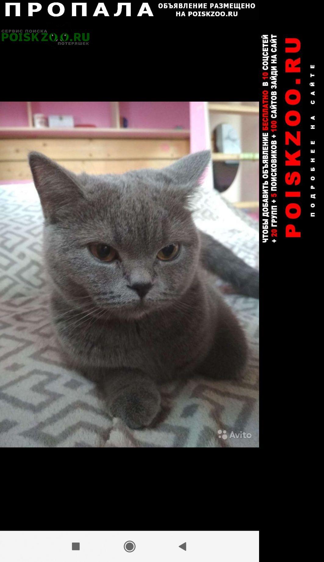 Пропала кошка британская Красногорск