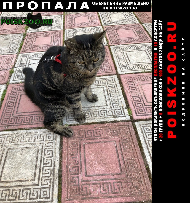 Пропал кот д. кашино - марс Истра