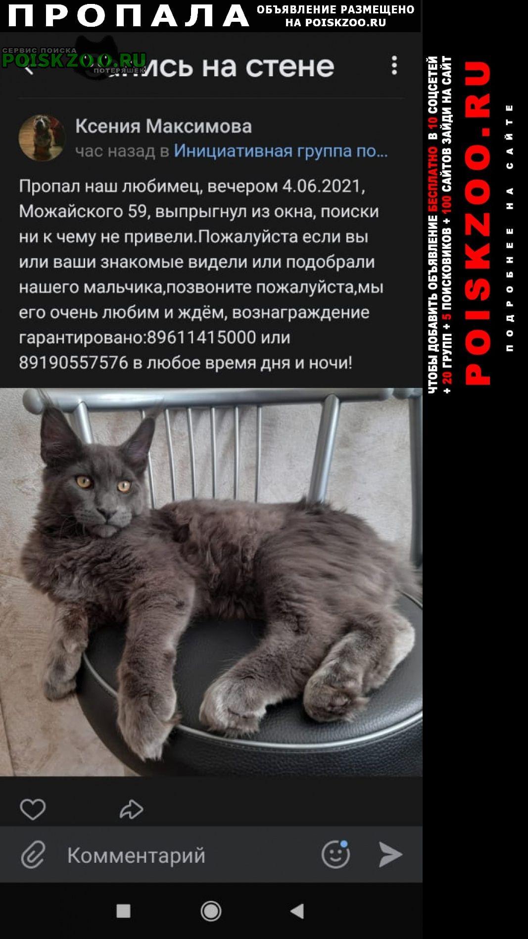 Пропал кот мейкун Тверь