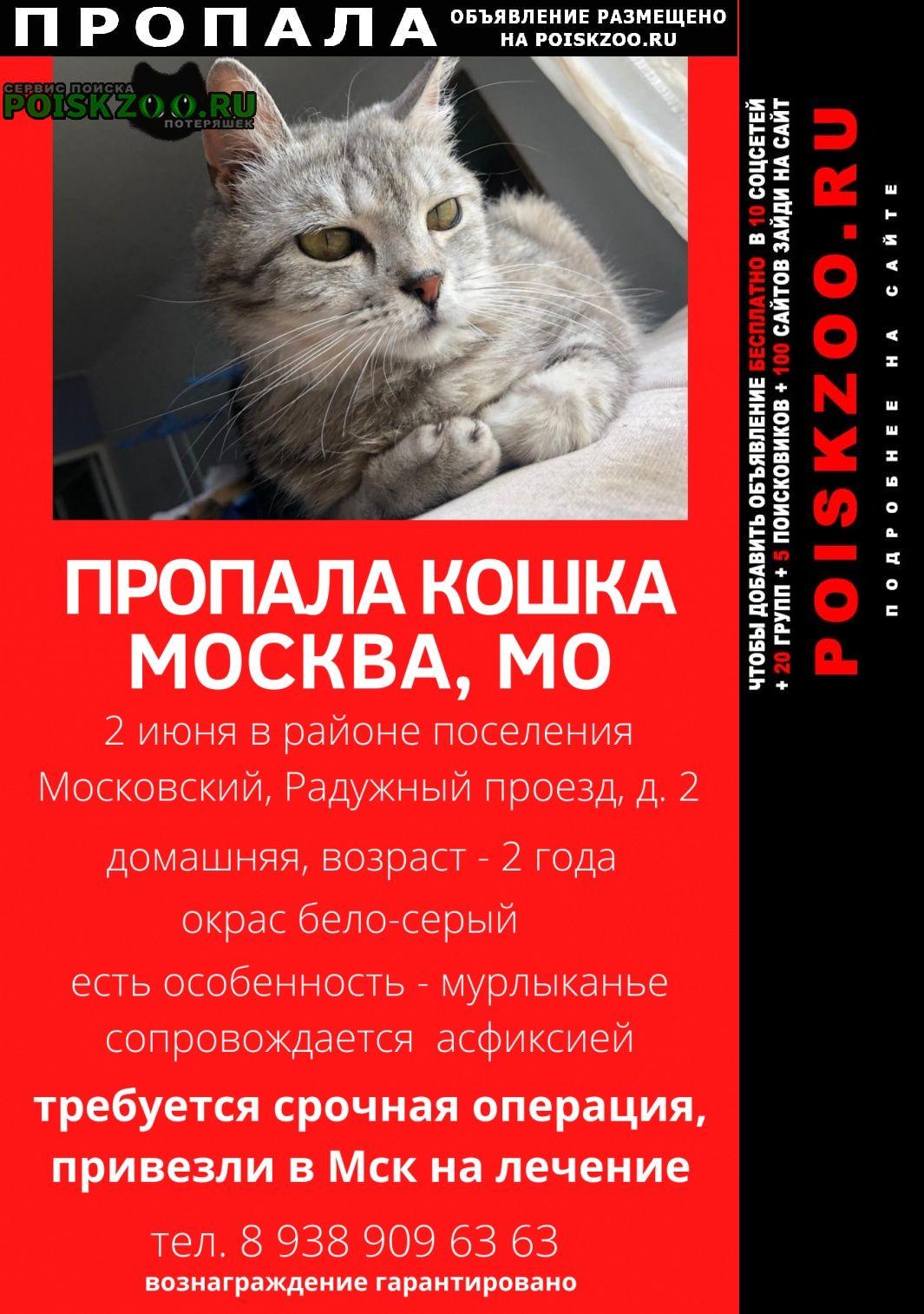 Пропала кошка пос. московский Москва